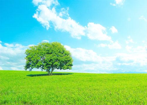 青空の下に広がる原っぱに1本大きな木が立っている